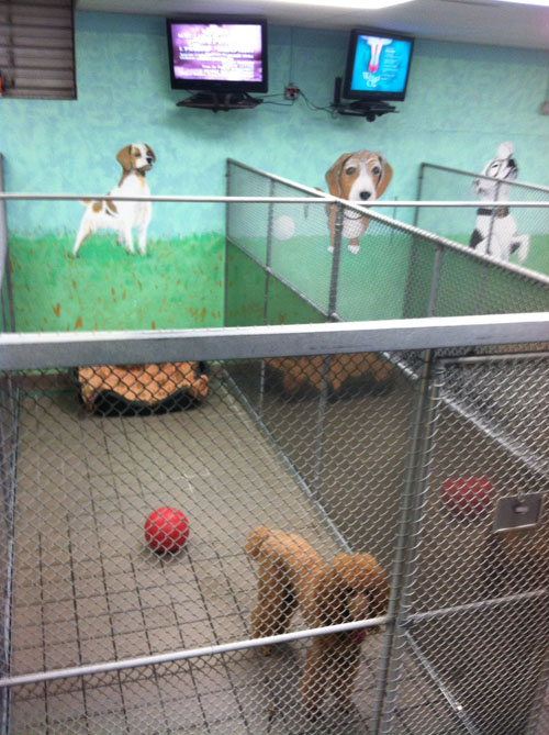 Hal Wheeler S Dog Amp Cat Boarding Kennel Cedar Grove Nj