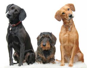 Hal Wheelers Dog Day Care Cedar Grove Nj